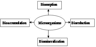 Figure Methods of Uranium Bioremediation