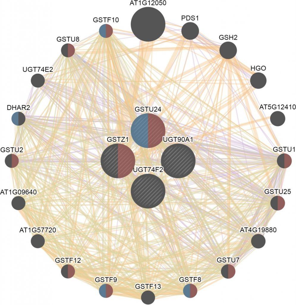 Gene association networks of targeted xenobiotics conjugation genes in Arabidopsis thaliana