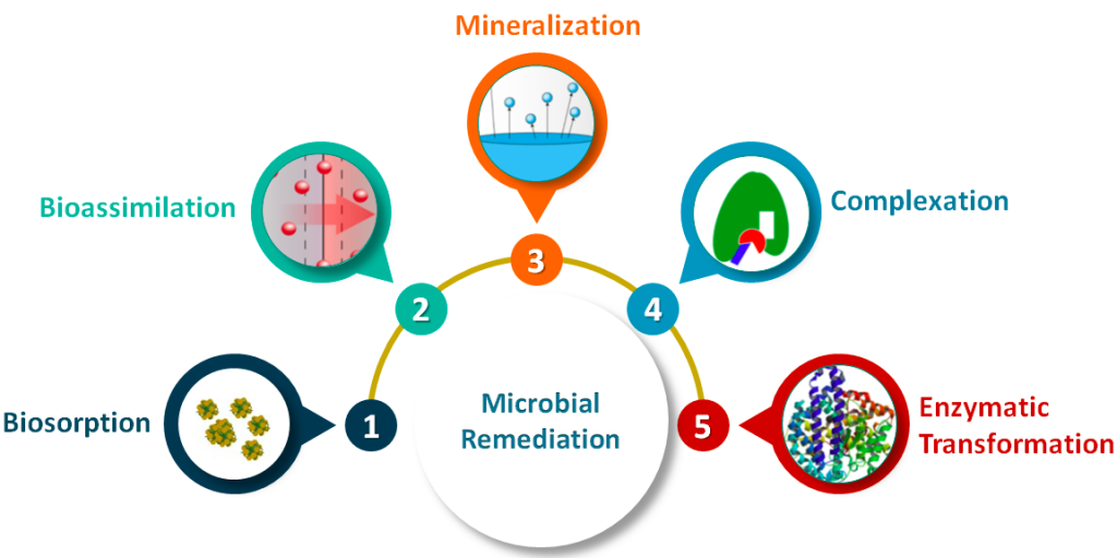 Common microbial processes involved in Bioremediation