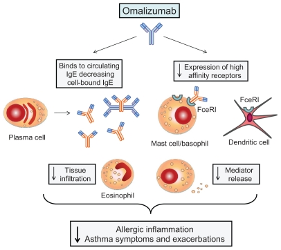 Mechanism of action of Omalizumab