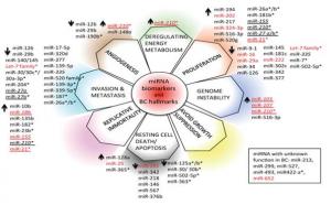 Types and role of miRNA biomarkers in case of Breast Cancer (Bertoli, Cava and Castiglioni, 2015)