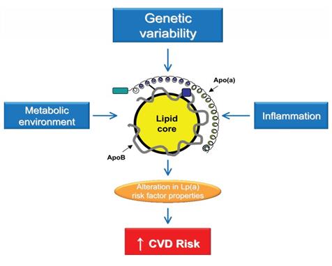 Lipid Biomarkers (Benn, 2008)