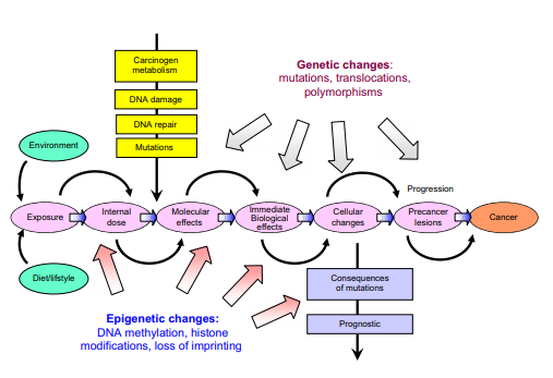 Genetic and epigenetic changes causing Cancer and Cancer biomarker detection (Herceg and Hainaut, 2007)