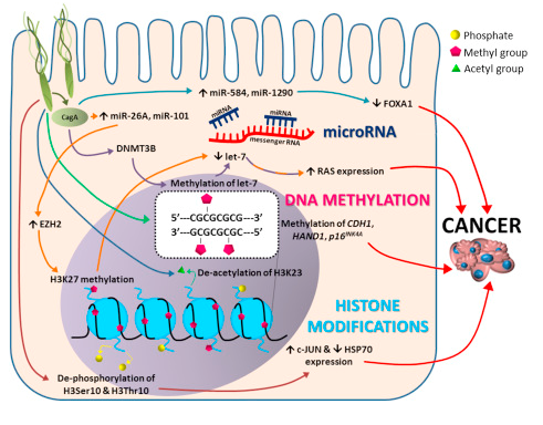 DNA-methylation as epigenetic biomarker (Syn, Blackwell and Jamieson, 2016)